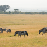 イノベーション創出拠点としてのアフリカ